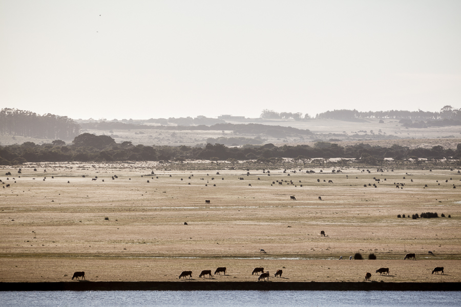 Uruguay landscape