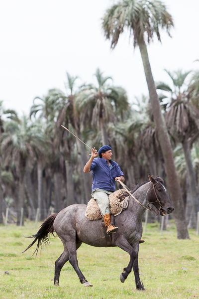Uruguay, polo, horse