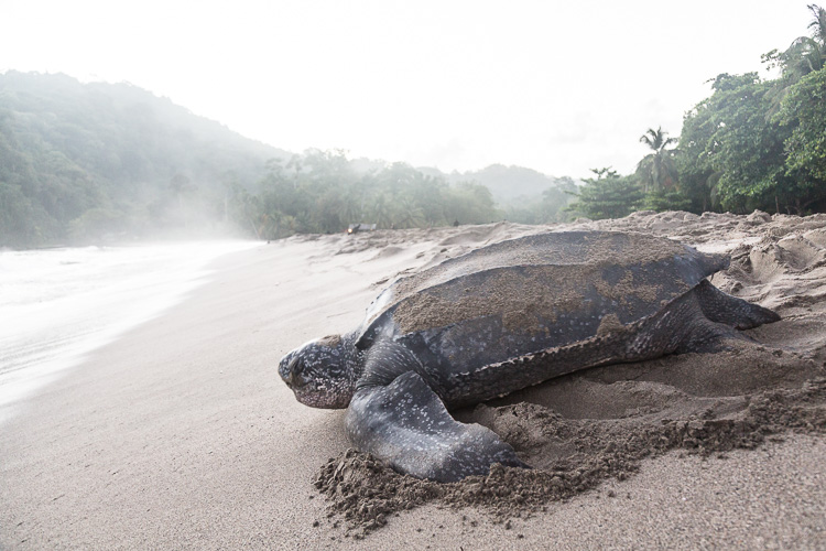 Turtle, Trinidad and Tobago