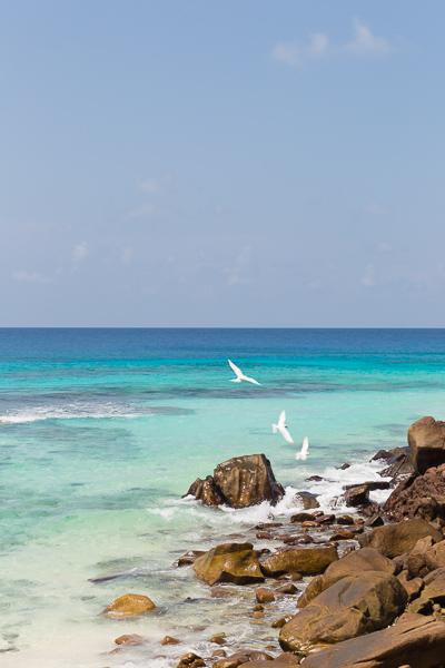 Seychelles stone beach